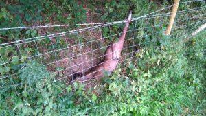 deer-fence-chanctonbury-28-aug-2016