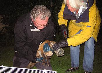 Fox released from plastic bottle West Sussex